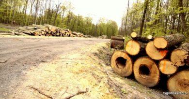 Ciął, ciął i się naciął, las w Bytomiu