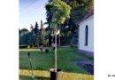 Podkościołem urosną nowe drzewa